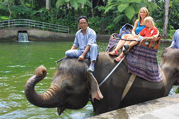 Sloni neměli chybu!